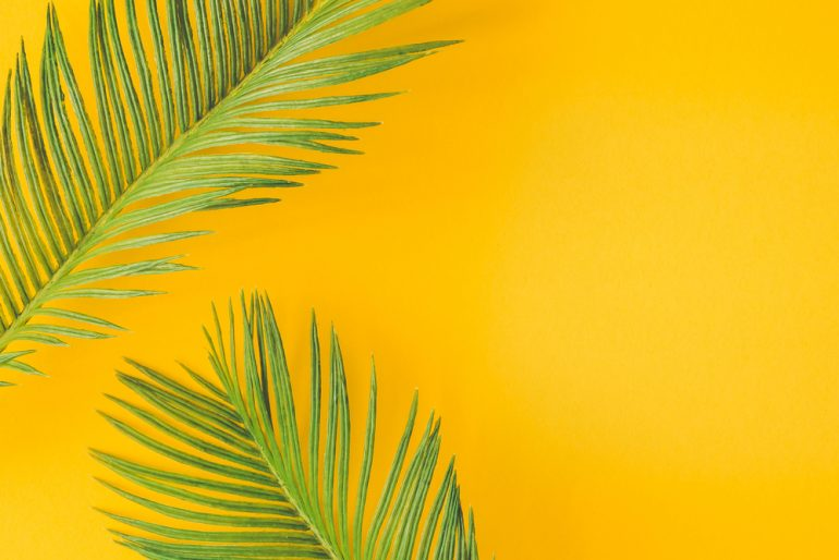 palm tree leaves against yellow wall