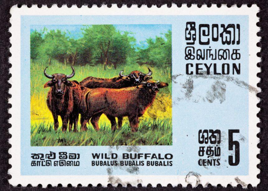 Sri Lanka Translation Blunders Hit a Nerve