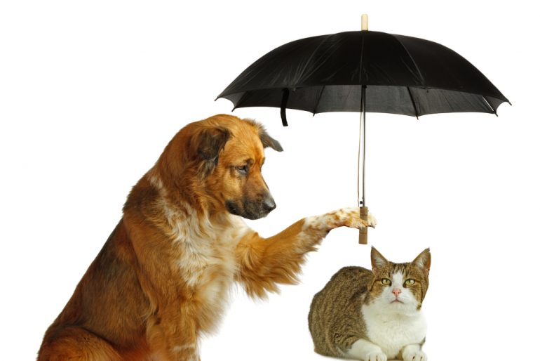 dog holding an umbrella over a cat